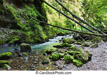 Enchanted forest - Landscape with lush forest and a river...