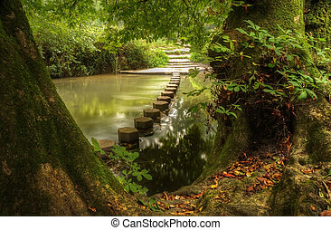 Enchanted forest scene of slow flowing stream with vibrant...
