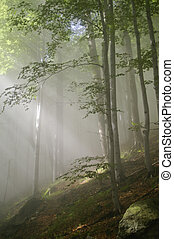 Enchanted forest - Rays of sun light in a misty forest