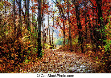 Enchanted Forest Path in Rural Minnesota in Indian Summer