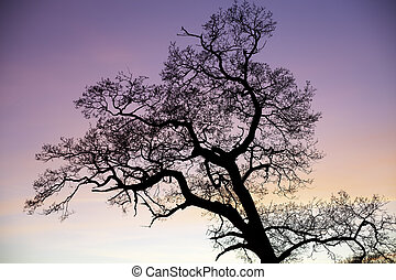 Enchanted tree silhouette against pink sky at sunset