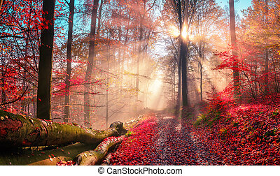 Enchanting autumn scenery in dreamy colors