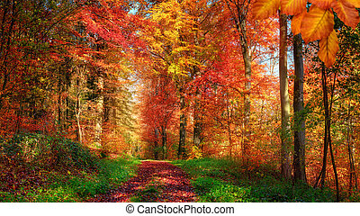Enchanting colorful forest scenery in autumn