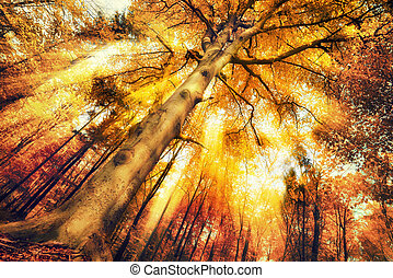 Enchanting forest scenery in autumn, with intense moody ...
