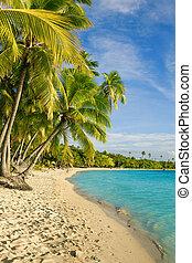 encima, árboles, tropical, palma, laguna, fiji