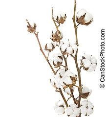 encima, blanco, algodón