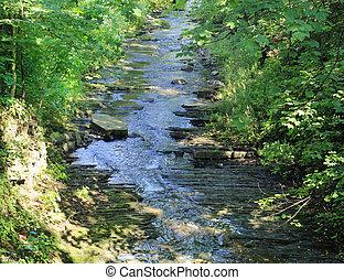 encima, bosque, musgoso, corriente, rocas, arroyo