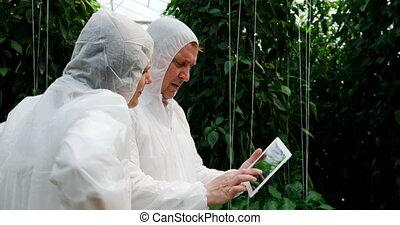 encima, digital, científicos, invernadero, tableta, discutir...