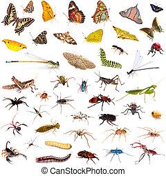 encima, fondo blanco, conjunto, insectos