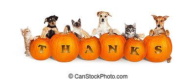 encima, perros, calabazas, gatos, acción de gracias