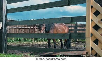 enclos, brun, ensoleillé, cheval, beau, temps, été