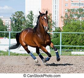 enclos, cheval
