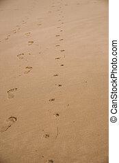 encombrements, chien, marché, sable, nu, humain, mouillé, petit, plage