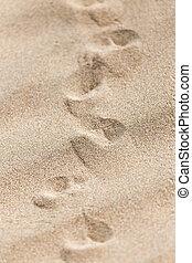 encombrements, lézard, sable