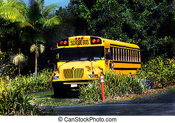 End of School day on Big Island - Yellow school bus parks...