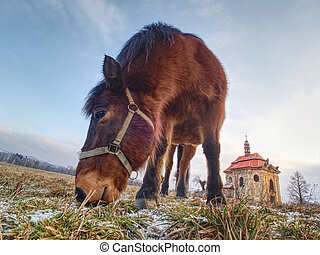 End of winter on pasture with old horse.