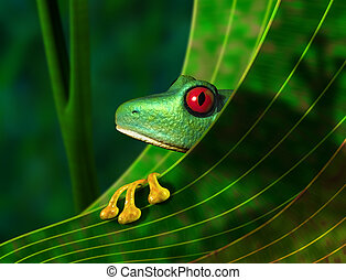 Illustration of an endangered red eyed tree frog peering from behind a leaf in the rainforest