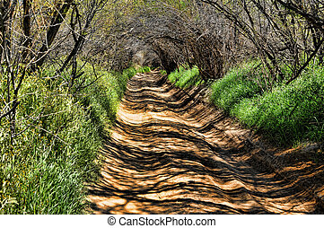 Endless Green Tunnel - A road and path leading into a long ...