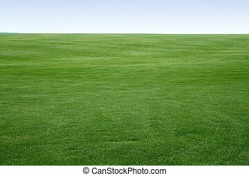 endless lawn - big field covered of young green grass like ...