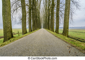 Endless road three - Endless road between an avenue of bare...