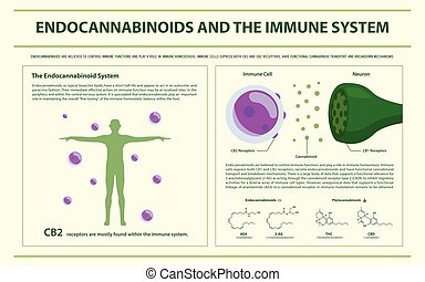 Endocannabinoids and the Immune System horizontal...