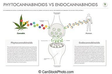 endocannabinoids, business, infographic, phytocannabinoids, ...