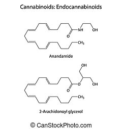 Endocannabinoids - signaling molecules of humans and animals, structural chemical skeletal formulas, 2d raster