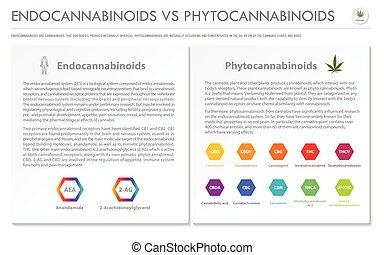 Endocannabinoids vs Phytocannabinoids horizontal business ...