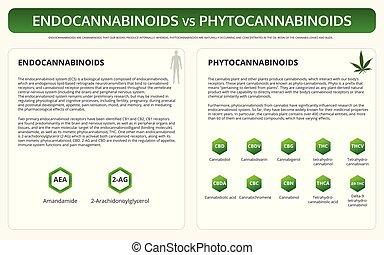 Endocannabinoids vs Phytocannabinoids horizontal textbook infographic