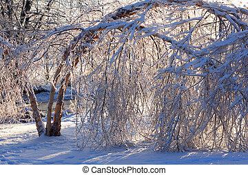endommagé, après, arbres, storm., glace, extrême