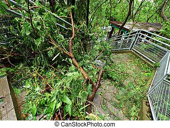 endommagé, après, typhon