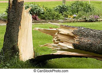 endommagé, arbre, vent