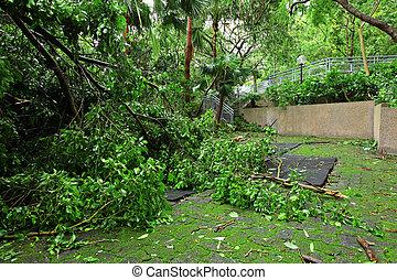 endommagé, typhon, jardin