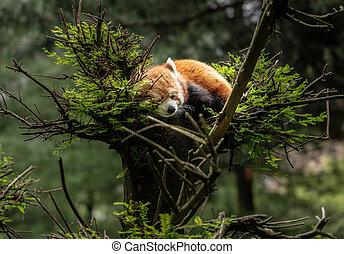 endormi, arbre, panda, rouges