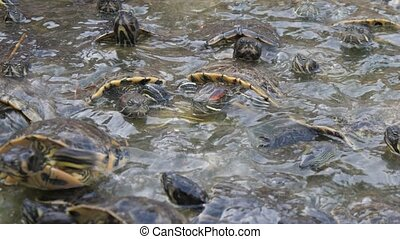 Energetic small colorful turtles creeping on each other and ...
