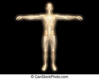 energi, krop