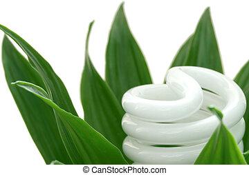energia, poupar, bulbo leve, ligado, planta verde