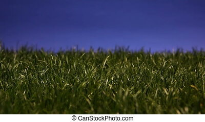 Compact fluorescent light bulb inserted into patch of grass and lighting up