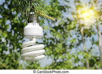Energy saving light bulb on a branch of pine - ecological...