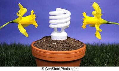 Energy saving light bulb planted