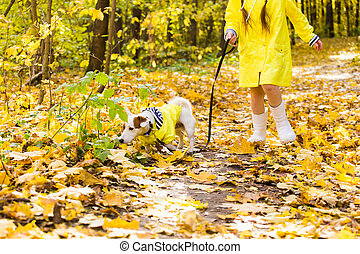 enfant, gosse, puppy., russell, girl, terrier, outdoors., chouchou, autumn., chien, cric