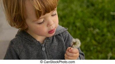 enfant, intéressé, souffler, pissenlit