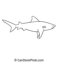 enfants, livre coloration, requin
