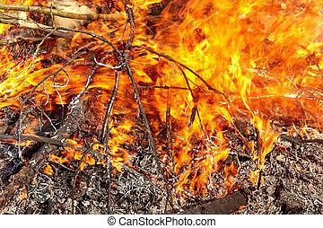 enflammer, branches, brûlé, feu, fire., wood., closeup.