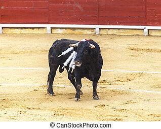 enfurecido, bloodied, ataques, español, bullfighter., bull.,...