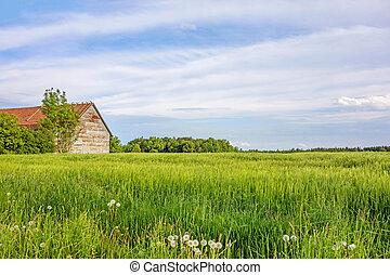 eng, majs felt, landligt landskab, lade