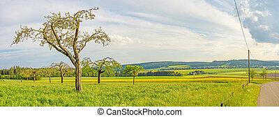eng, panorama, -, træer, frugt, grønne, landligt landskab