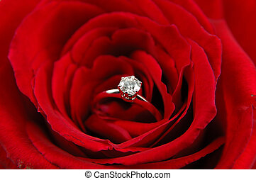 Engagement ring in red rose