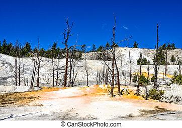 engelchen, tot, yellowstone, bäume, ansicht, landschaftsbild, terrasse