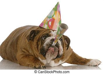 engelskor bulldogg, födelsedag, hund, tröttsam, hatt, och, blåsning, på, horn